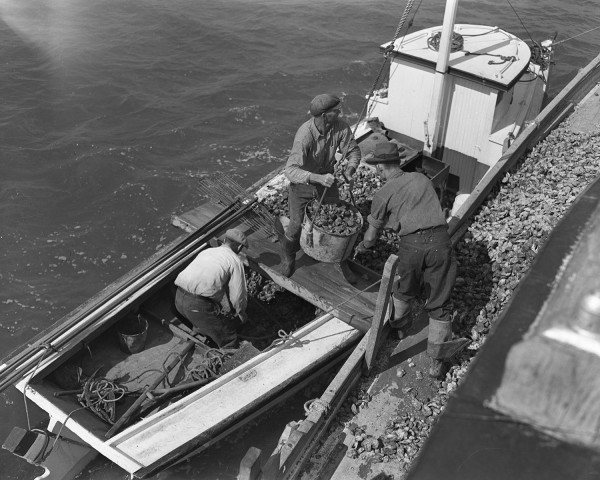 watermen_and_oyster_industry_october_1940_2773_006